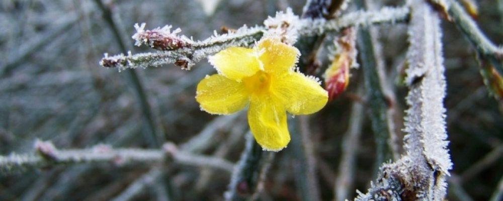 Come curare le piante d'inverno